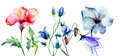 Decorative original flowers garden watercolor illustration Royalty Free Stock Photo