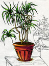 Decorative palm tree in red pot clay standing on the table hear to other house plants ink drawing colored Stock Image