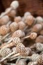 Decorative pine corns Royalty Free Stock Photos