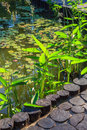 Decorative pond in the park Royalty Free Stock Photo