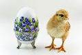Decorative porcelain egg and chick floral painted Royalty Free Stock Photos