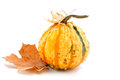 Decorative pumpkin with autumn leaves on white background Stock Photography