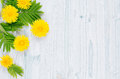 Decorative spring frame of yellow dandelion flowers and green leaves on light blue wooden board. Copy space, top view.