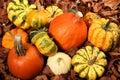 Decorative Squash, cucurbitaceous, pumpkin, on white background