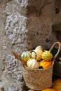 Decorative squashes and pumpkin in wicker basket with handles front of the stone wall Royalty Free Stock Image