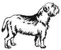 Decorative standing portrait of dog Griffon Belge vector illustr Royalty Free Stock Photo