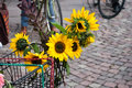 Decorative sunflowers on bike Royalty Free Stock Photo
