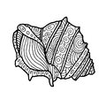 Decorative Zentangle Sea Shell illustration. Outline drawing. Coloring book for adult and children. Coloring page. Vector
