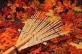Decorazione d'autunno. Fotografie Stock Libere da Diritti