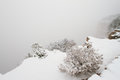The deep abyss of grand canyon covered fog for snowstorm arizona usa Stock Photo