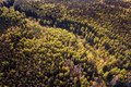 Deep dark forest aerial view Royalty Free Stock Photo