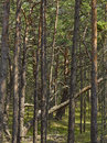 Deep forest coastal beside baltic sea Stock Images