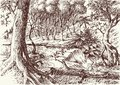 Deep forest hand drawing