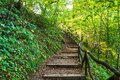 Deep Forest Hiking Trail. Hiking Up Wooden Stairs on a Woodland Trail in Forest Royalty Free Stock Photo