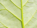 Deep green leaf. Element of design. Royalty Free Stock Photos