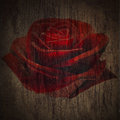 Deep red roses grunge in wooden texture dramatic light Royalty Free Stock Images