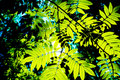 Deep summer foliage Royalty Free Stock Images