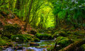 In deep summer wood Royalty Free Stock Photo