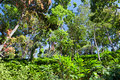 Deep tropical forest Royalty Free Stock Images