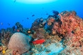 Deep water coral reef and fish Royalty Free Stock Photo