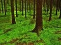 Deep wood Royalty Free Stock Photo