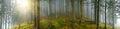 Deep wood panorama Royalty Free Stock Photo