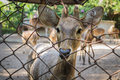 Deer in the cage Royalty Free Stock Photos