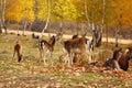 Deer eating a leaf Stock Image