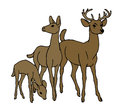 Deer family isolated on a white background Royalty Free Stock Photography