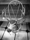 Deer Head in Garage Sale with Price Tag
