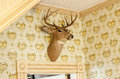 Deer head trophy on wall mounted over a door frame in old antique house Royalty Free Stock Photography