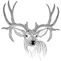 Deer head vector animal illustration for t shirt sketch tattoo design Stock Photo