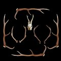 Deer hunting trophies on dark background Royalty Free Stock Photo