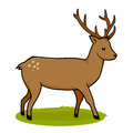 Deer isolated on white background illustration of a the grass Royalty Free Stock Photos