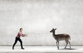 Deer on lead young man in casual holding Royalty Free Stock Images