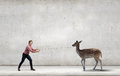 Deer on lead young man in casual holding Stock Image