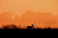 Deer in the meadow A black silhouette. Royalty Free Stock Photo