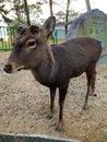 stock image of  Deer in Nara, Japan
