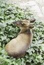 stock image of  Deer in nature