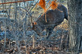 Deer in net the spotted meshed on garden Royalty Free Stock Images