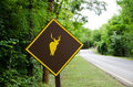 Deer sign on the way go to national park in kanchanaburi thailand Royalty Free Stock Photo