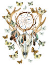 Deer skull. Animal skull with dreamcather and butterfly. Royalty Free Stock Photo