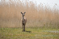 A deer standing in the sunlight