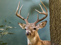 Deer a taxidermist s in a forest atmosphere Stock Image