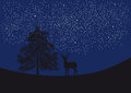 Deer under the starry sky Royalty Free Stock Photo