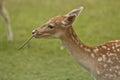 Deer in wild Stock Photos