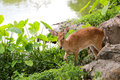 Deer Or Young Hart Animal In T...