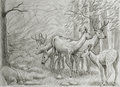 Deers family hand drawing of in mountain forest Royalty Free Stock Image