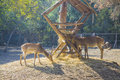 Deers feeding herd of in park Royalty Free Stock Photography
