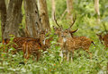 Deers in mudumalai forest tamilnadu Stock Photos